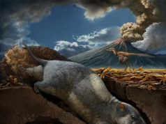 Scientists discover two new species of ancient burrowing mammal ancestors
