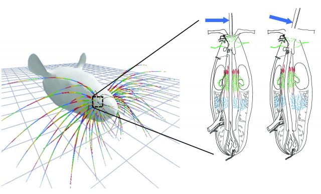 Whisker simulation gives insight into mammals sense of touch