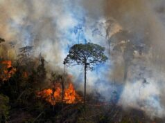 Climate change Amazon may be turning from friend to foe