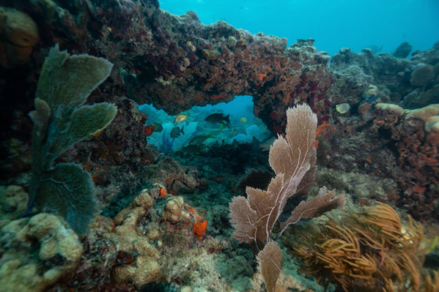 Coral reefs prevent more than 5.3 billion in potential flood damage for U.S. property owners study finds