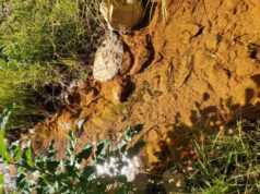 Long term monitoring shows successful restoration of mining polluted streams