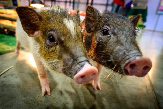 Mammals can breathe through anus in emergencies 2