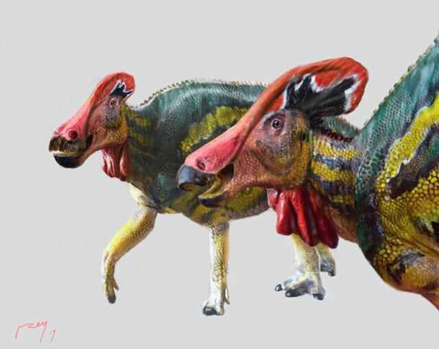 Tlatolophus galorum. Credit: Luis V. Rey / Cretaceous Research (2021). DOI: 10.1016/j.cretres.2021.104884