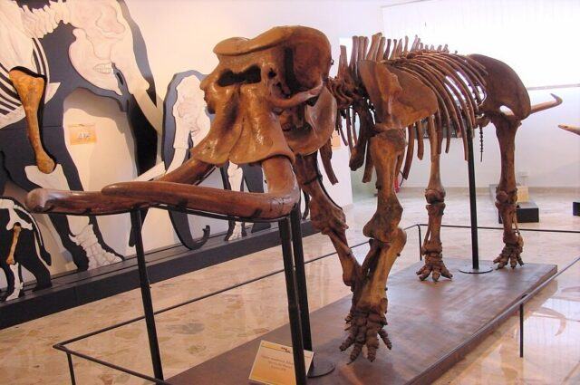 One of the largest ever land mammals evolved into extinct dwarf elephant 1
