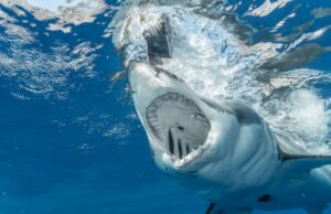 Researchers find 3000 year old shark attack victim