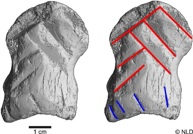 Ancient bone carving could change the way we think about Neanderthals 1