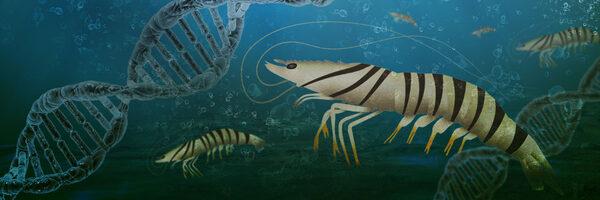 20210914 kuruma shrimp header 1 8DtQeW